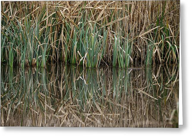 Close Up Image Of Reeds In Water During Spring Greeting Card