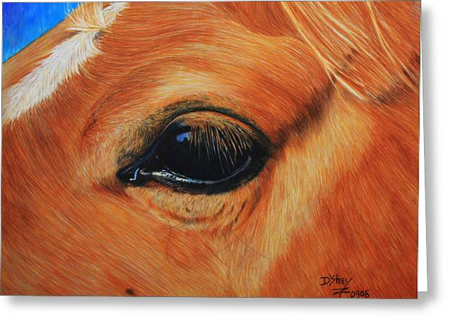 Close Up Of A Horse Greeting Card by Don MacCarthy