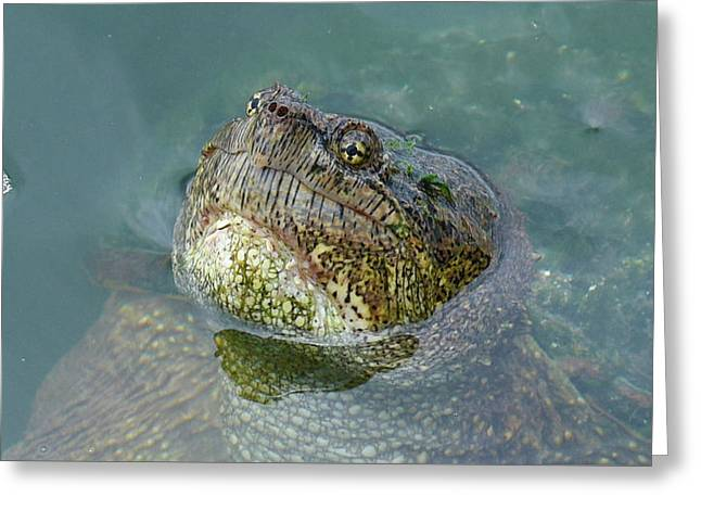 Greeting Card featuring the photograph Close Up Of A Snapping Turtle by Sally Sperry