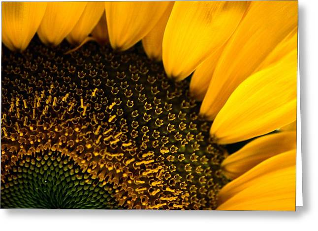 Close-up Of A Sunflower Greeting Card by Todd Gipstein