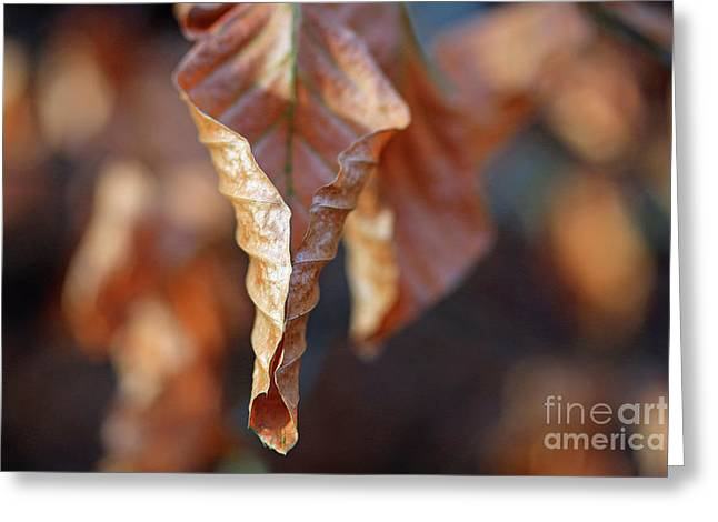 Close-up Of Autumn Leaf Greeting Card