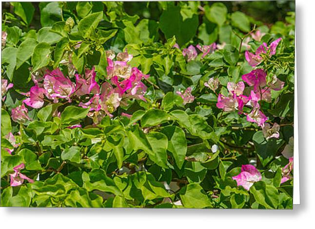 Close-up Of Flowers, Venice, Florida Greeting Card by Panoramic Images