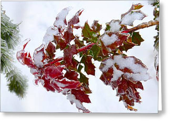 Close-up Of Frost On Plants Greeting Card by Panoramic Images
