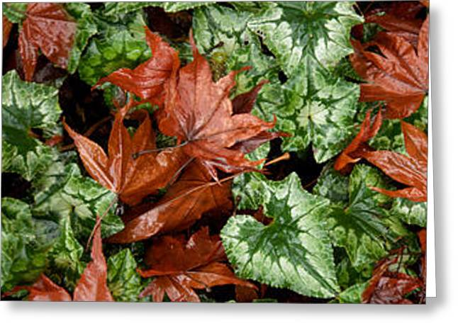 Close-up Of Green And Brown Leaves Greeting Card by Panoramic Images
