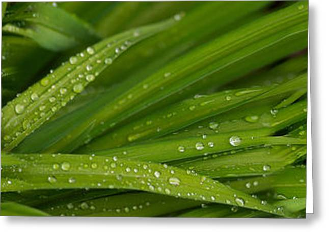 Close-up Of Wild Wet Grass Greeting Card