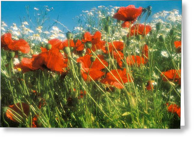 Close-up Of Wildflowers And Poppies Greeting Card by Panoramic Images