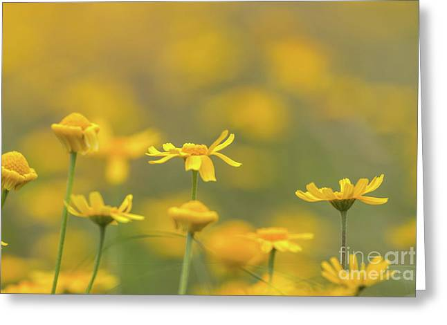Close Up Of Yellow Flower With Blur Background Greeting Card