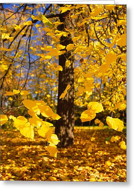 Close-up Of Yellow Leaves Of A Tree Greeting Card