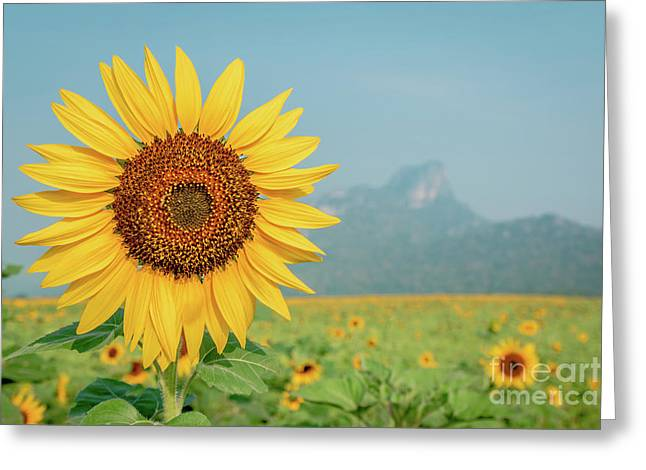 Close-up On Sunflower. Greeting Card by Tosporn Preede