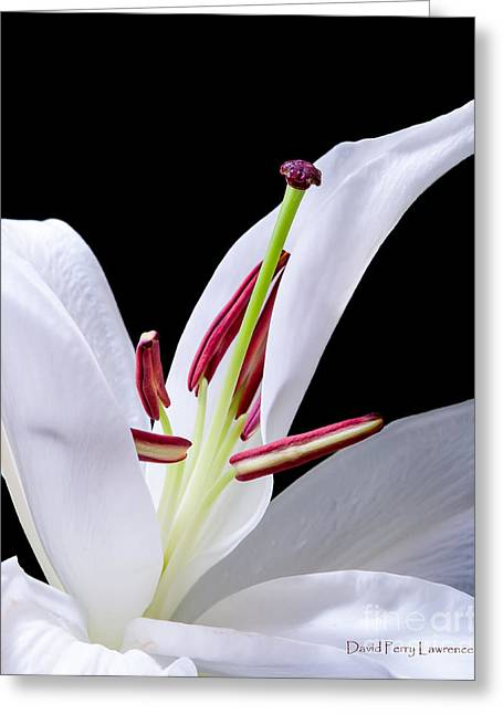 Greeting Card featuring the photograph Close-up Photograph Of A White Oriental  Lily by David Perry Lawrence