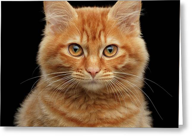 Close-up Portrait Of Ginger Kitty On Black Greeting Card