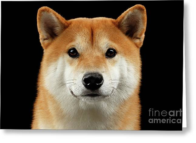 Close-up Portrait Of Head Shiba Inu Dog, Isolated Black Background Greeting Card