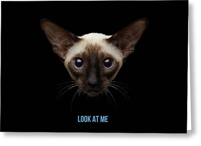 Close-up Portrait Of Oriental Shorthair Kitty Looking At Camera  Greeting Card by Sergey Taran