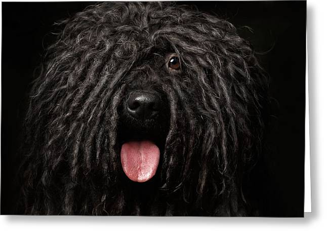 Close Up Portrait Of Puli Dog Isolated On Black Greeting Card by Sergey Taran
