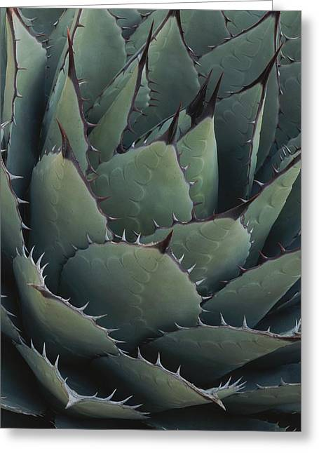 Close View Of An Agave Plant Greeting Card