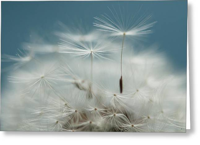 Close Your Eyes And Make A Wish  Greeting Card