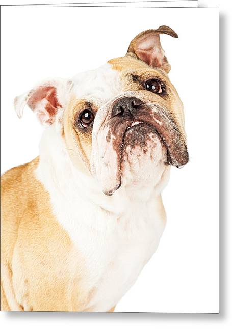 Closeup Adorable English Bulldog Looking Up Greeting Card by Susan Schmitz