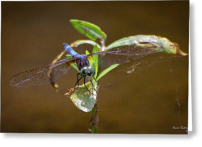 Closeup Callaway Gardens Dragonfly Art Greeting Card by Reid Callaway