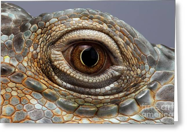 Closeup Eye Of Green Iguana Greeting Card