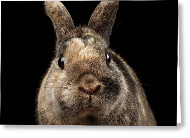 Closeup Funny Little Rabbit, Brown Fur, Isolated On Black Backgr Greeting Card
