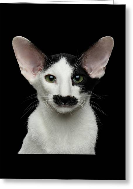 Closeup Funny Oriental Shorthair Looking At Camera Isolated, Bla Greeting Card by Sergey Taran