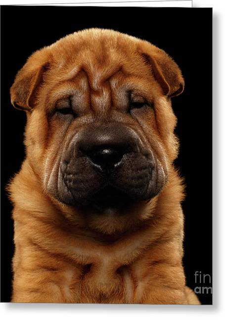 Closeup Funny Sharpei Puppy Isolated On Black Greeting Card by Sergey Taran