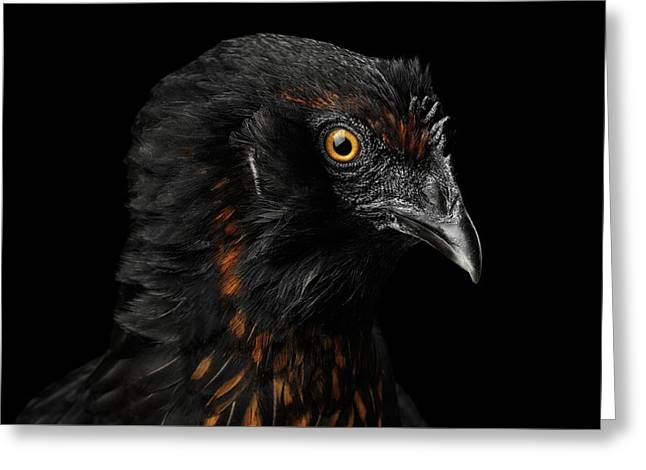 Closeup Ginger Chicken Isolated On Black Background In Profile V Greeting Card by Sergey Taran