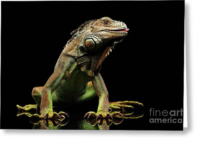 Closeup Green Iguana Isolated On Black Background Greeting Card