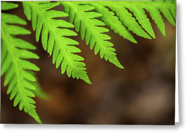 Greeting Card featuring the photograph Closeup Macro Of Green Leaves Show Textured Of The Organs With S by Jingjits Photography