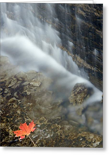 Closeup Maple Leaf And Decew Falls, St Greeting Card by Darwin Wiggett