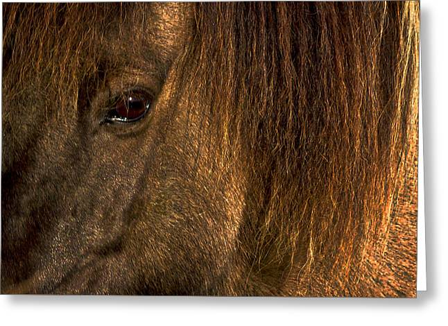 Closeup Of An Icelandic Horse #2 Greeting Card by Stuart Litoff