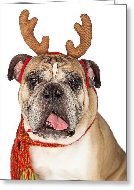 Closeup Of Christmas Reindeer Dog Greeting Card by Susan Schmitz