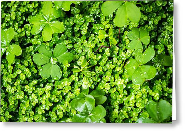 Lush Green Soothing Organic Sense Greeting Card