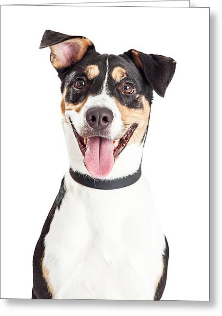 Closeup Of Happy Crossbreed Dog Mouth Open Greeting Card by Susan Schmitz