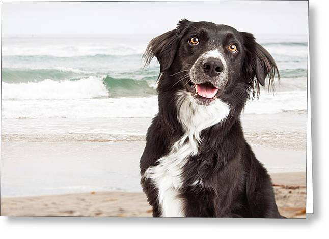 Closeup Of Happy Dog At Beach Greeting Card