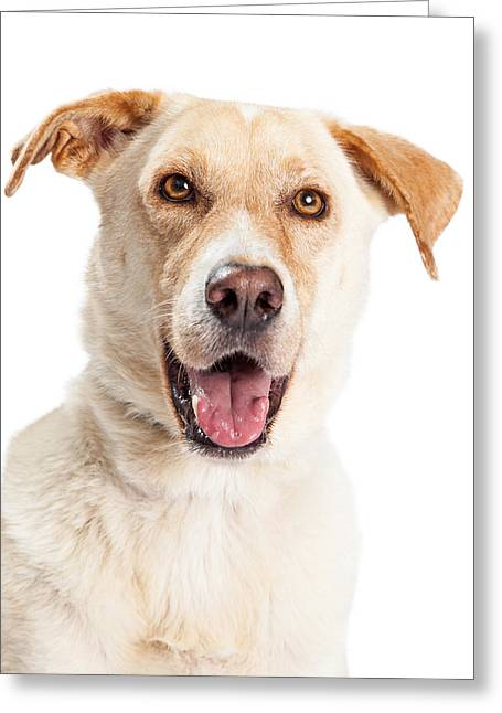 Closeup Of Happy Yellow Labrador Dog Crossbreed Greeting Card by Susan Schmitz