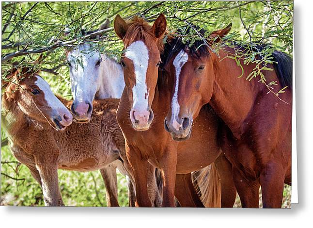 Closeup Of Herd Of Four Wild Horses Greeting Card