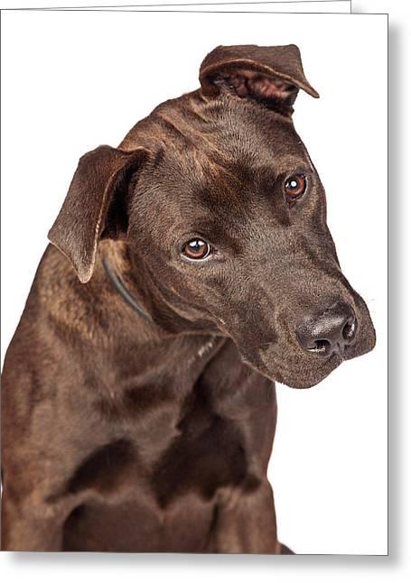 Closeup Of Labrador Crossbreed Dog Tilting Head Greeting Card by Susan Schmitz