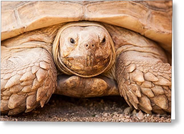 Closeup Of Large Galapagos Tortoise Greeting Card by Susan Schmitz