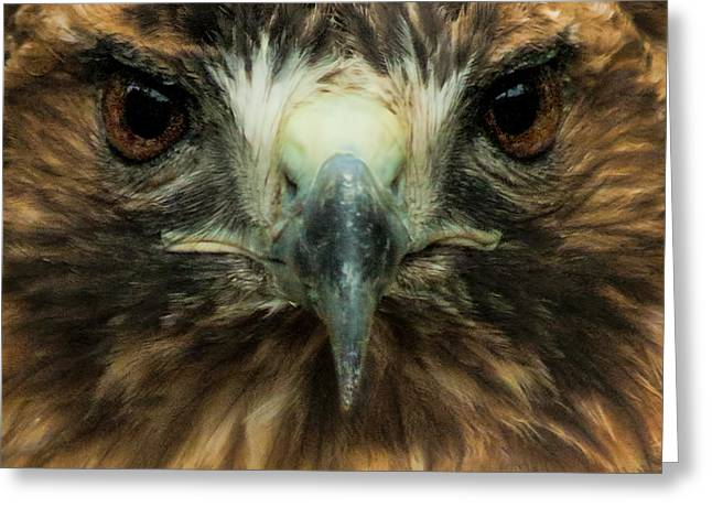 Closeup Of The Face Of A Red-tailed Hawk Greeting Card