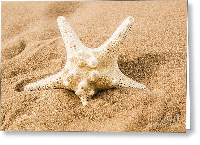 Closeup On A Seashore Starfish Greeting Card by Jorgo Photography - Wall Art Gallery