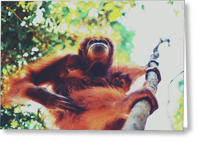 Closeup Portrait Of A Wild Sumatran Adult Female Orangutan Climbing Up The Tree And Holding A Baby Greeting Card