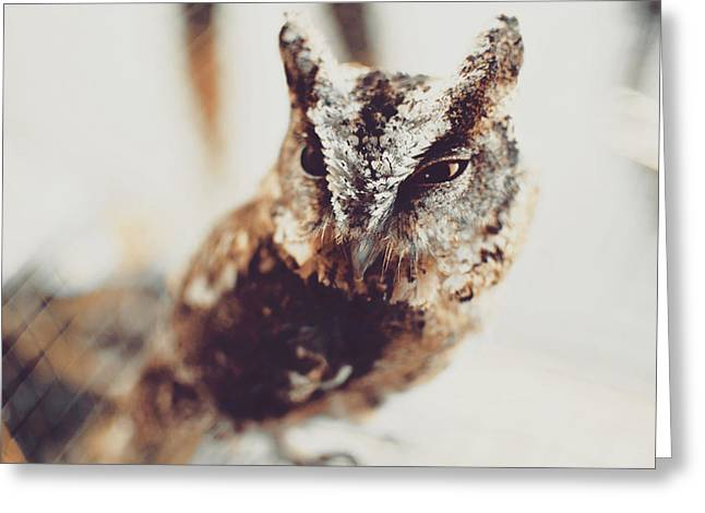 Closeup Portrait Of A Young Owl Looking At The Camera Greeting Card
