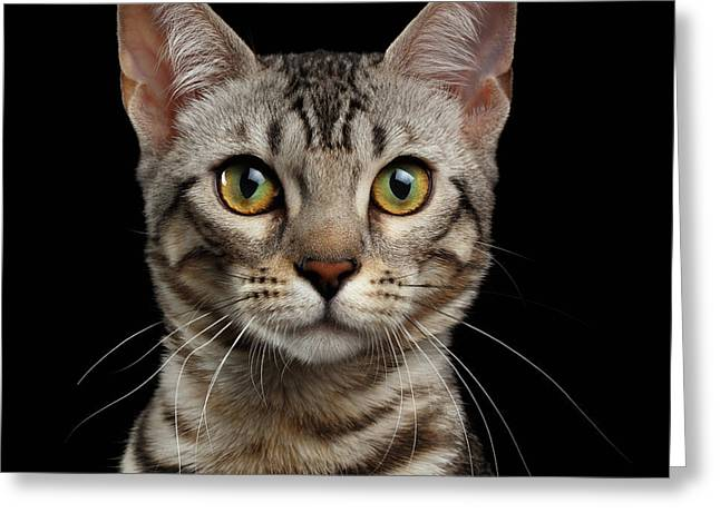 Closeup Portrait Of Bengal Kitty Looking At Camera On Black  Greeting Card by Sergey Taran