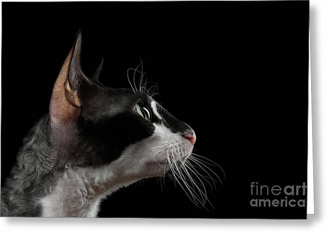 Closeup Portrait Of Cornish Rex In Profile Isolated On Black  Greeting Card by Sergey Taran