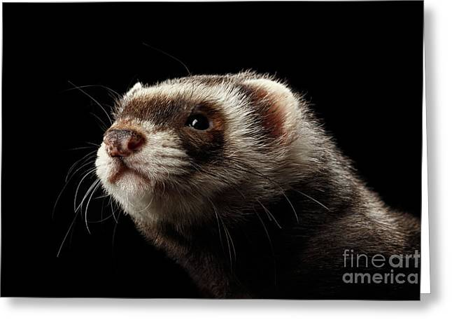 Closeup Portrait Of Funny Ferret Looking At The Camera Isolated On Black Background, Front View Greeting Card