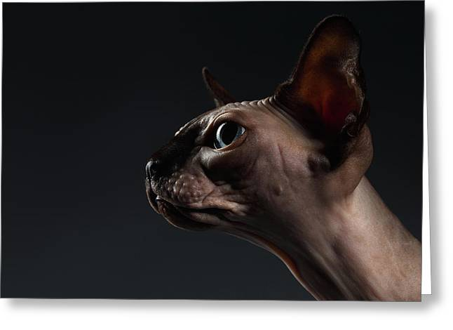 Closeup Portrait Of Sphynx Cat In Profile View On Black  Greeting Card