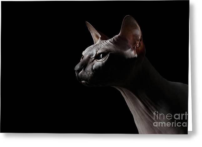 Closeup Sphynx Cat Looking Forward On Black Greeting Card by Sergey Taran