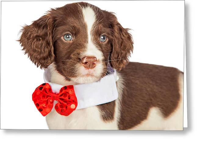 Closup Puppy Wearing Red Christmas Tie Greeting Card