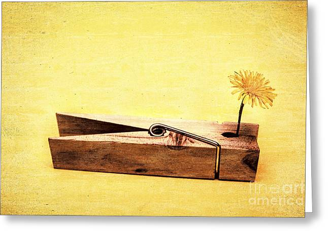 Clothespins And Dandelions Greeting Card by Jorgo Photography - Wall Art Gallery
